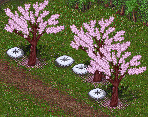 Cherry Trees by Linnet