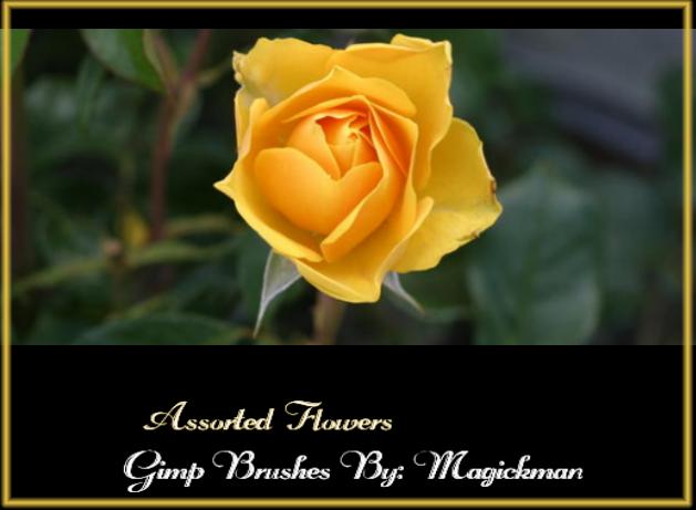 Flowers gimp brushes by blueeyedmagickman
