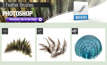 3 Photoshop Brushes for Painting Feathers