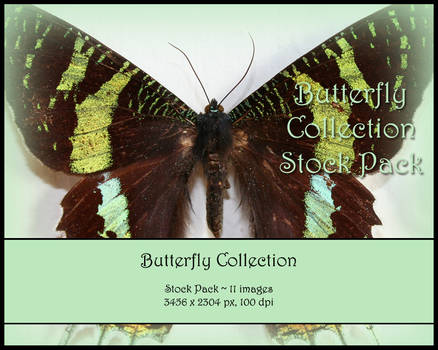 Butterfly Stock Pack