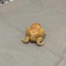 Froggy Butt Wiggle
