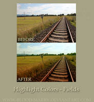 Highlight Colors-Fields Action by blood-marry