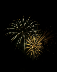 Fireworks with Tree silhouette