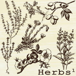 herbs brushes 1 by beti123