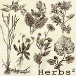 herbs brushes 2