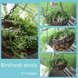 birdnest stock