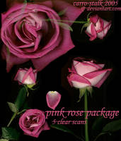 pink rose package by carro-stalk
