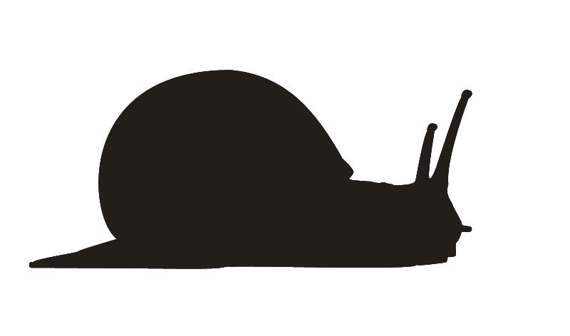 Snail Vector by ekamanganese