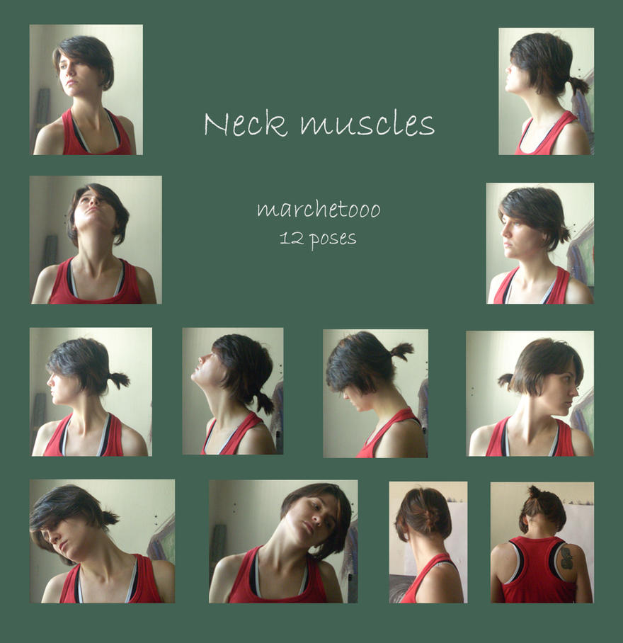 Neck muscles by marchetooo