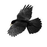 Raven by freelance001artist