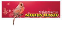 Red Bird vector web logo