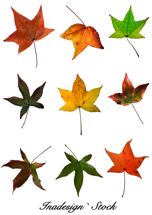 Autumn Leaves - Pack 1