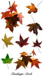 Autumn Leaves - Pack 2