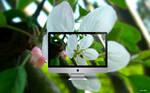 Spring Blossom '11