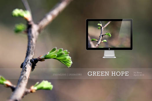 HD Wallpapers Green Hope