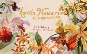 April's Flowers by mellowmint