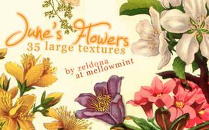 June's Flowers by mellowmint