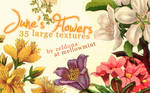 June's Flowers