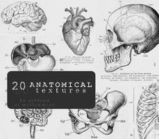 Anatomical textures