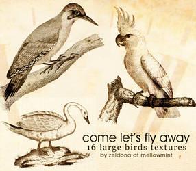let's fly away - bird texures