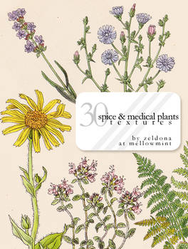 spice and medical plants