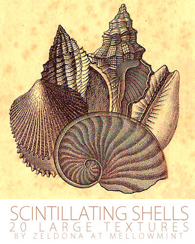 Scintillating Shells by mellowmint