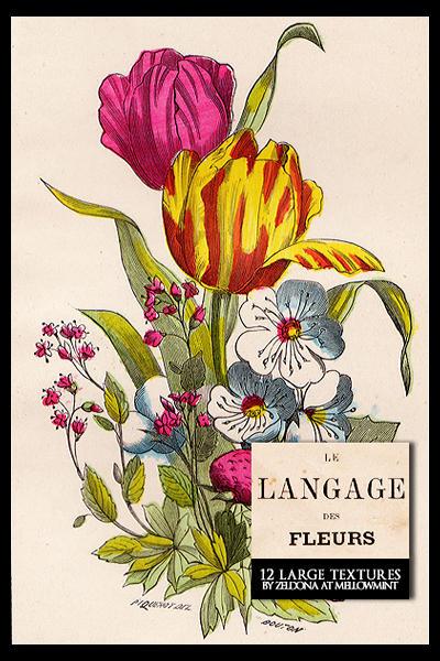 Le langage des fleurs by mellowmint on deviantart for Langage des fleurs