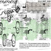 DNA by AntiBrush