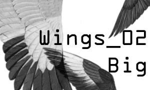 Wings_02Big brushes
