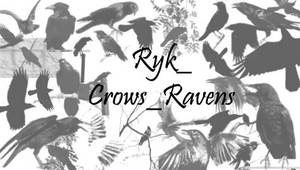 Ryk_Crows_Ravens brushes