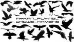 Ryk_Flying_Crows_Ravens brushs