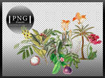 Plants #1 PNG X9