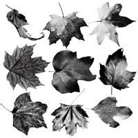 Leaf Brushes by Thy-Darkest-Hour