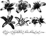 Lilly Brushes 02