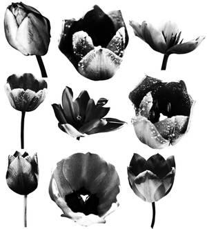 Tulip Brushes 02