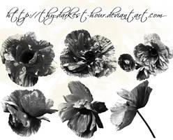 Poppy Brushes by Thy-Darkest-Hour