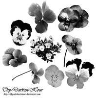 Viola Brushes by Thy-Darkest-Hour