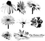 Flower Brush Set 02