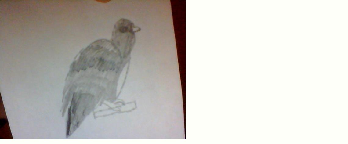 My BIRD by CaseyLPS
