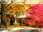 AutumnXP 1 logonXP