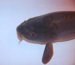 Fish by ilon07