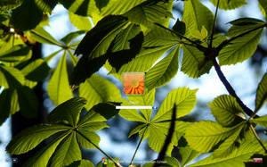 Leaf it green logon