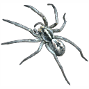 spider icon by natureboyuta