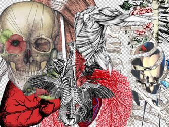 Anatomy PNGs v.1 by Nyssa-89