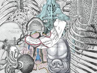Anatomy PNGs v.2 by Nyssa-89