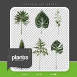 .plants png #58