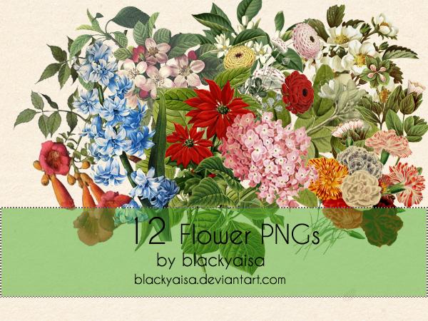 Flower PNGs: 16 by blackyaisa