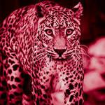Psychodelic Leopard by spike83