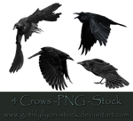 Crows-Stock-by-GothLyllyOn-Stock