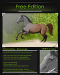 Grayscale canter